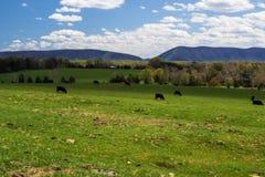 史密斯山Huddleston,弗吉尼亚,美国 免版税图库摄影