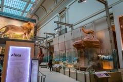 史密森学会的全国自然历史博物馆的内部的非洲人霍尔-华盛顿, D C ,美国 库存照片