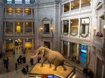 史密森学会的全国自然历史博物馆的内部-华盛顿, D C ,美国 免版税库存照片