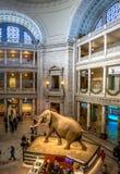 史密森学会的全国自然历史博物馆的内部-华盛顿, D C ,美国 库存照片