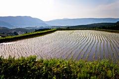史诗露台的米领域横向在日本 库存图片