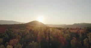 史诗鸟瞰图:薄雾Forrest日落五颜六色的秋天树金黄小时日落上色史诗荣耀启发 股票录像