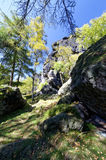 绿叶包围的一个岩石地形 免版税库存图片