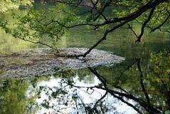 绿叶和反射自然墙纸  库存图片