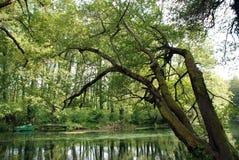 绿叶和反射自然墙纸  免版税库存照片