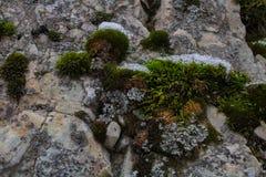 叶子、杉木针、青苔和木头在冬天雪秋天 免版税库存照片