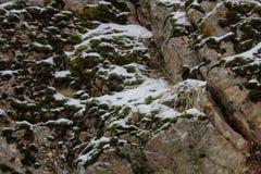 叶子、杉木针、青苔和木头在冬天雪秋天 免版税库存图片