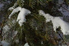 叶子、杉木针、青苔和木头在冬天雪秋天 库存照片