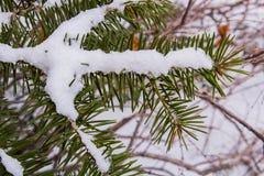 叶子、杉木针、青苔和木头在冬天雪秋天 库存图片