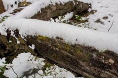 叶子、杉木针、青苔和木头在冬天雪秋天 图库摄影