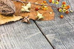 叶子、植物和坚果在难看的东西木背景 免版税库存照片