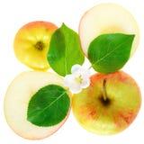 叶子、花和苹果切片隔绝了顶视图 库存照片