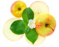 叶子、花和苹果切片隔绝了顶视图 库存图片