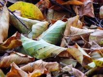 叶子一张美丽的地毯在秋天 向量例证