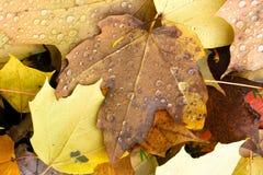 叶子下落的冬天自然地面秋天季节变动露滴 免版税库存图片
