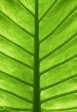 叶子下面 免版税图库摄影