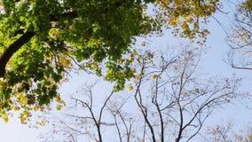 叶子从结构树落 影视素材