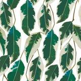叶子仿造无缝的白色背景 库存照片