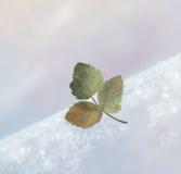 叶子冬天 库存图片