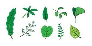 叶子分支绿色背景 免版税库存图片