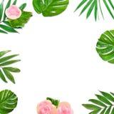 叶子创造性的布局在白色背景的与文本的空间 叶子和花框架 背景细部图花卉向量 免版税库存照片