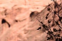 叶子剪影和Tucupit的南面孔指向, Kolob,锡安国家公园,犹他的手指峡谷 库存照片