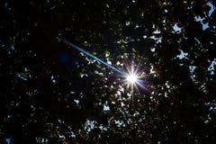 叶子剪影有火光的从太阳 库存图片