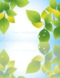 叶子反映水 向量例证