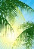 叶子发出光线热带的星期日 库存图片