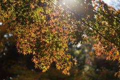叶子变动颜色在秋天 库存图片
