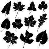 叶子向量 免版税库存照片