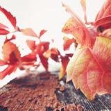 叶子和切削油漆 免版税库存照片