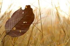 叶子和在日落期间的草地 免版税库存图片