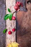 叶子和小苹果在空的切板附近在木土气背景 顶视图 框架 复制空间 感恩日 平面 免版税库存照片