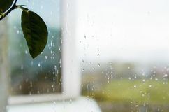 叶子和晴雨表窗口 免版税库存图片