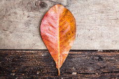 叶子和木头板 免版税图库摄影