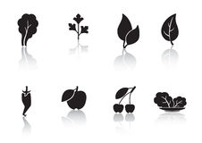 叶子和果子 库存照片