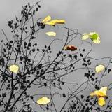 叶子和树反射在水中 秋天自然艺术摄影  免版税图库摄影
