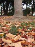 叶子和树在秋天 免版税库存照片