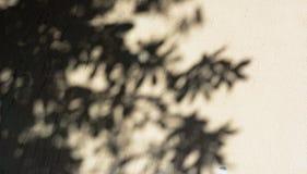 叶子和树的阴影在退色的被绘的墙壁上 免版税库存照片
