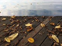 叶子和湖 免版税库存图片
