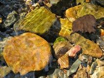 叶子和石头在溪 免版税图库摄影