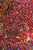 叶子和窗口背景  免版税库存图片