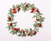 从叶子和红色莓果的框架 库存图片