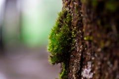 叶子和绿色青苔背景,与绿色青苔的树 背景背景蜡染布手册褐色圆的设计桌面例证邀请介绍树荫棕褐色二使用墙纸网站 库存照片