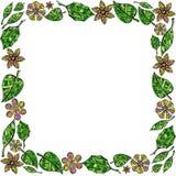 叶子和花框架在白色背景 库存照片