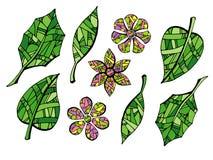 叶子和花的汇集在白色背景 库存照片