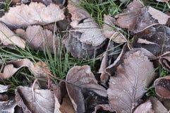 叶子和草与树冰秋天早晨 库存图片