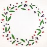 叶子和莓果五颜六色的明亮的框架在白色背景 平的位置 库存照片