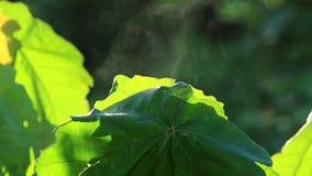 叶子和薄雾 股票视频